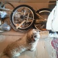 stowaway folding bike assembly