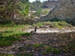Quaalup homestead kangaroos