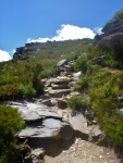 walking track up bluff knoll
