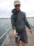 denial bay blue swimmer crab