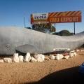 nullarbor eucla whale