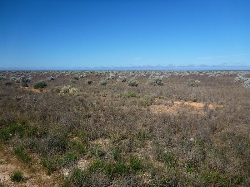 nullarbor landscape no trees