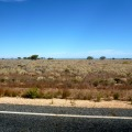 nullarbor plain near madura