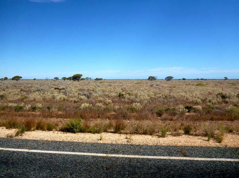 nullarbor plain near madura