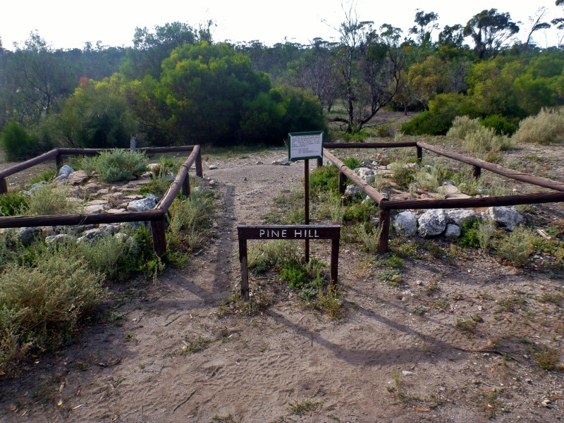 pine hill graves cape arid national park