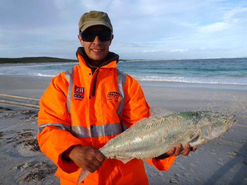 Salmon caught, Poison Creek, Cape Arid National Park
