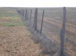 dog fence, Coober Pedy,South Australia