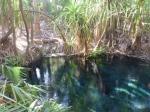 Mataranka bitter springs hot springs
