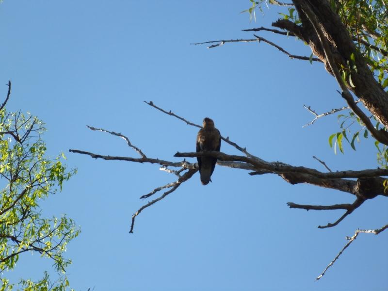 bird at florence falls camping area