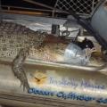 4 mile hole crocodile research