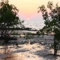 west alligator head head sunset over mangroves