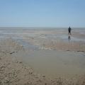 west alligator head tidal mud flats