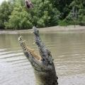 jumping crocodile (2)