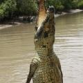 jumping crocodile (3)
