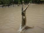 jumping crocodile (5)