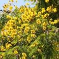 katherine flowers