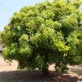 katherine mangos