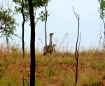 flying mini emu bird