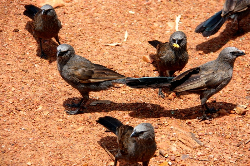 roper bar birds eating our pasta