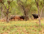 roper hwy buffalo