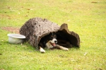 border collie sheep dog