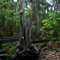 Buderim Forest Park