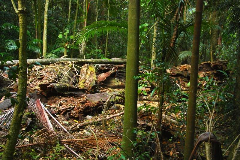 Fig Tree Walk fallen tree
