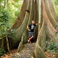 Fig Tree Walk