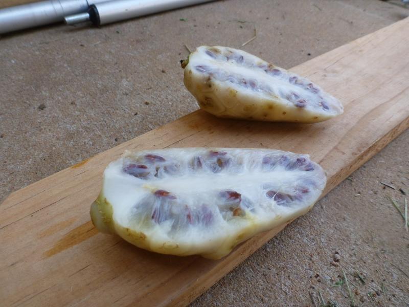 Great Morinda Fruit