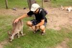 kangaroo (2)