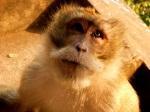 monkey near wat tham sua