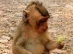 token monkey at angkor wat