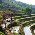crossing terraced paddy fields in northern vietnam