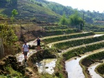crossing terraced paddy fields in northern vietnam