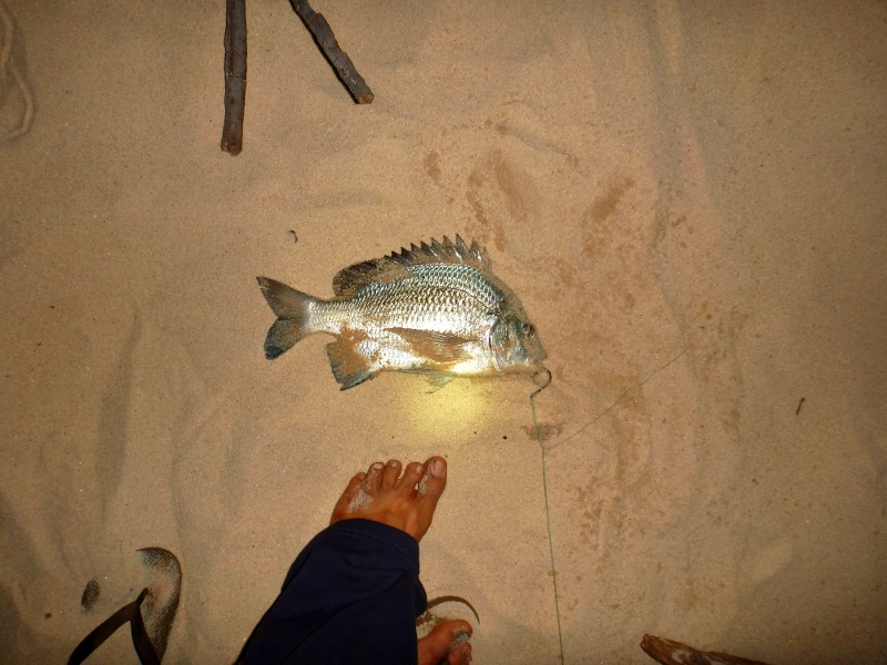 bream caught at mutee head