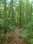 Climbing Trail Mt Bartle Frere