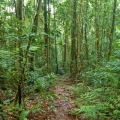 Climbing Trail Mt Bartle Frere