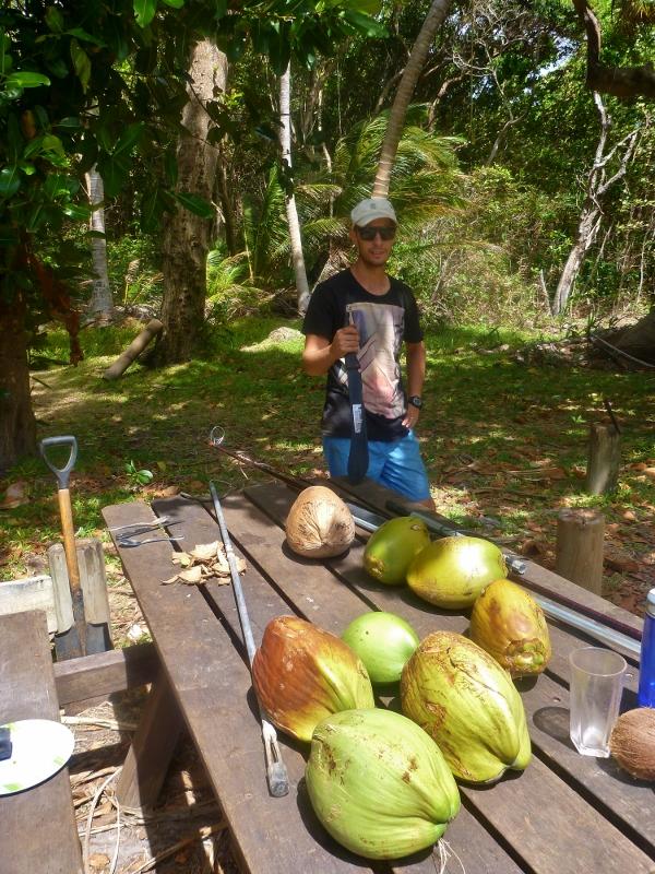 coconuts at chili beach