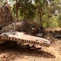 17 douglas DC3 1940 near Bamaga