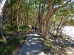 noosa national park coastal track