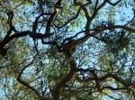 noosa national park koala