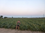 pineapple plantations near balgal beach queensland