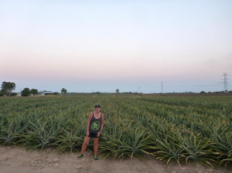 pineapple plantations near balgal beach queensland