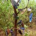 thong tree near somerset