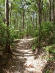 walking up noosa hill