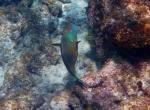 fish cayman island