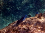 snorkelling cayman island