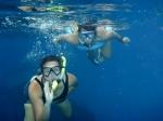 snorkelling kittiwake wreck