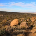 Mojave National Preserve California (2)