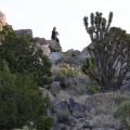 Sharni at the top of the Teutonia Peak Trail, Mojave Preserve California
